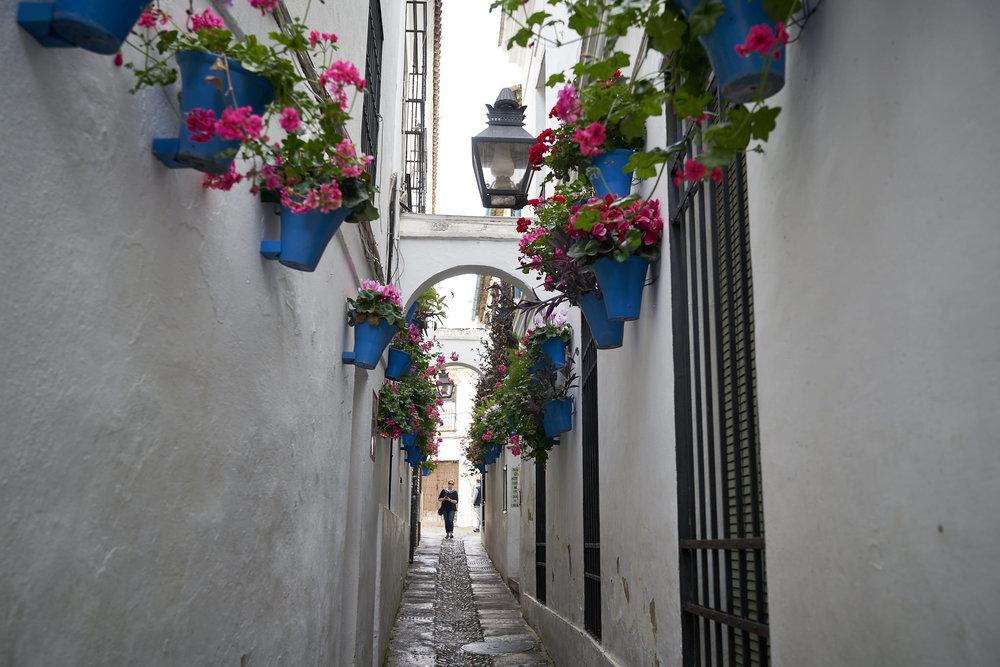 Córdoba y Granada DSC03902.jpg