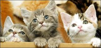 Who keeps kittens in a cardboard box? Or owns cats in the first place? They're barely even domesticated animals.