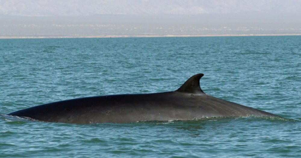 Fin_Whale_Hero_and_Circle_Image_107654.jpg