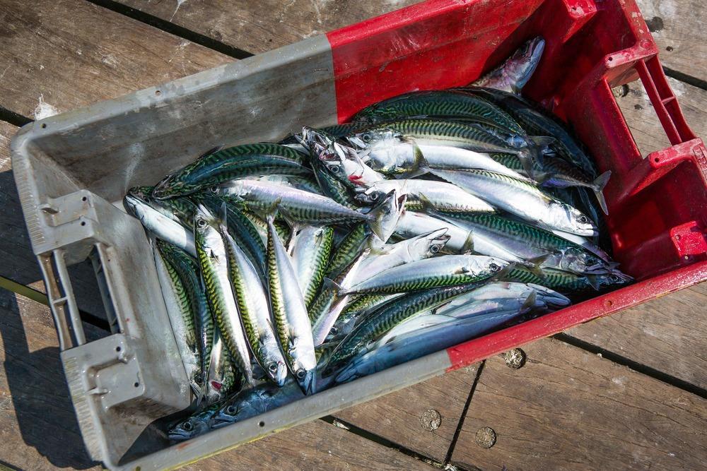 mackerel box.jpg