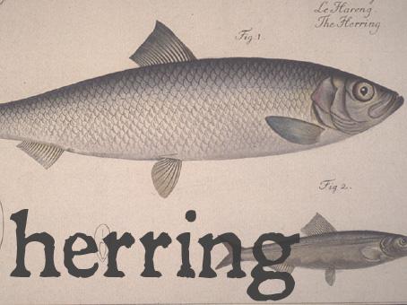 herring.jpg