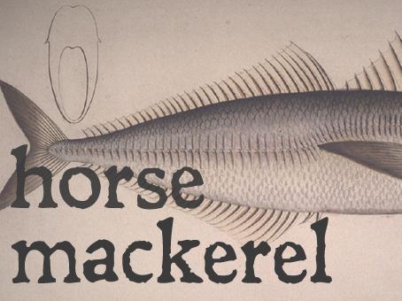 horse mack.jpg