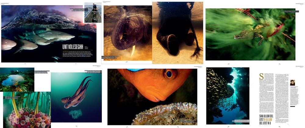 fish AM.jpg
