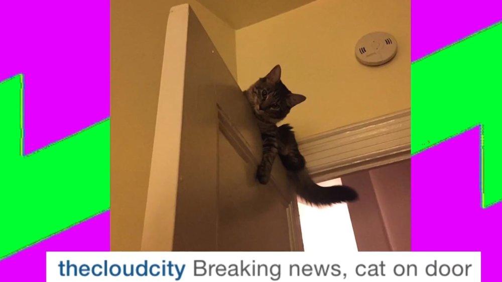 cat_on_door.jpg