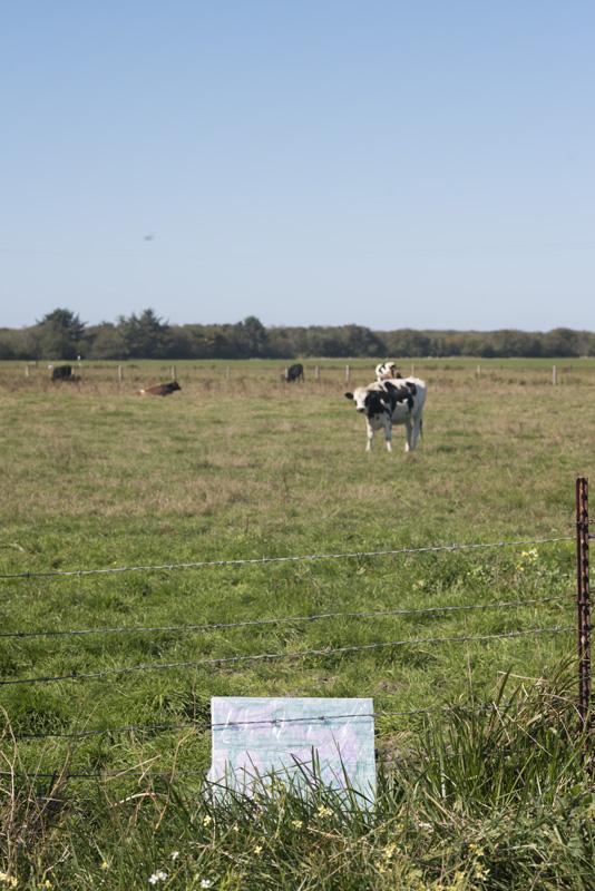 "#24, ""Me."" Cow field adjacent to Mad River Footbridge."