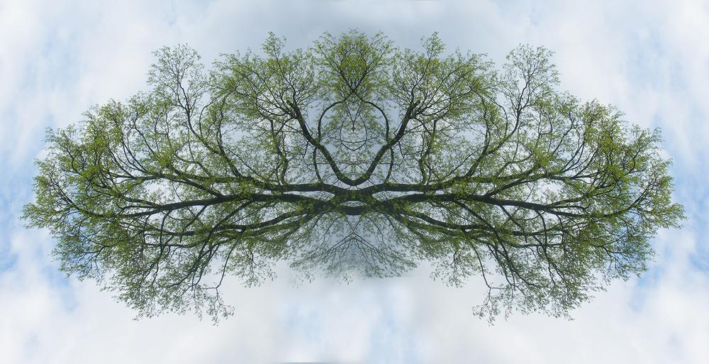tjungle_TreeYogi_2008_150dpi.jpg