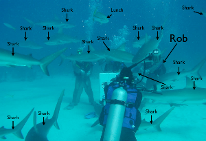 Rob with Sharks.png