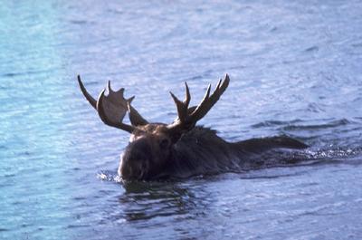 isle-royale-national-park-ga-4.jpg