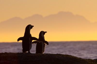 monogamous-penguins.jpg