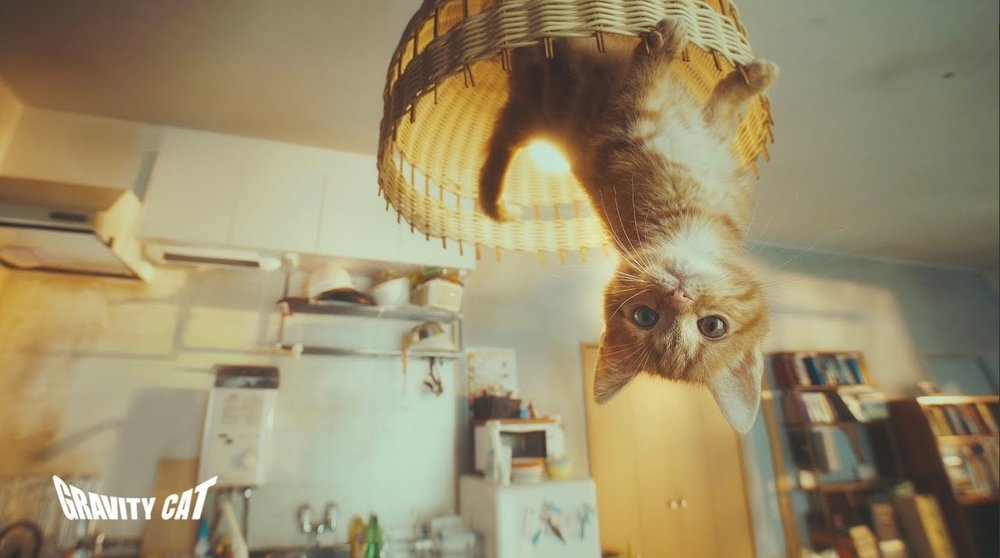 gravity cat.jpg