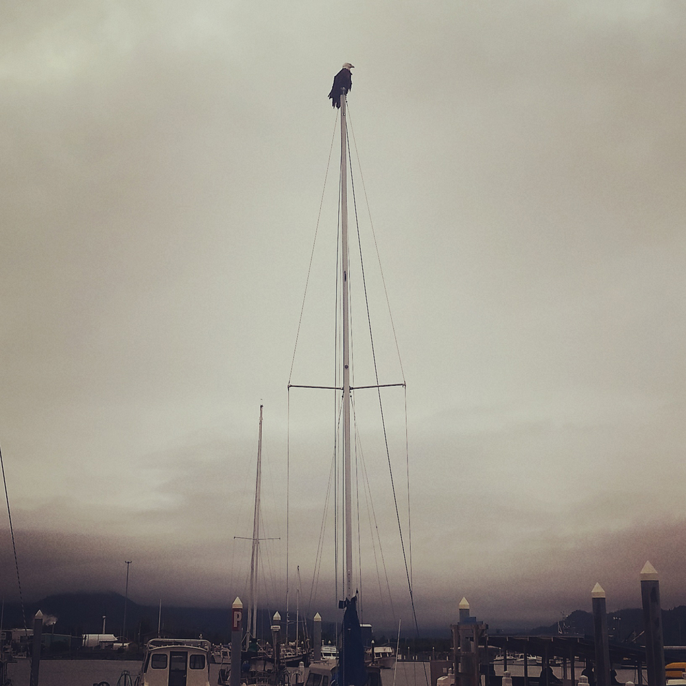 This sailboat is bald eagle approved.