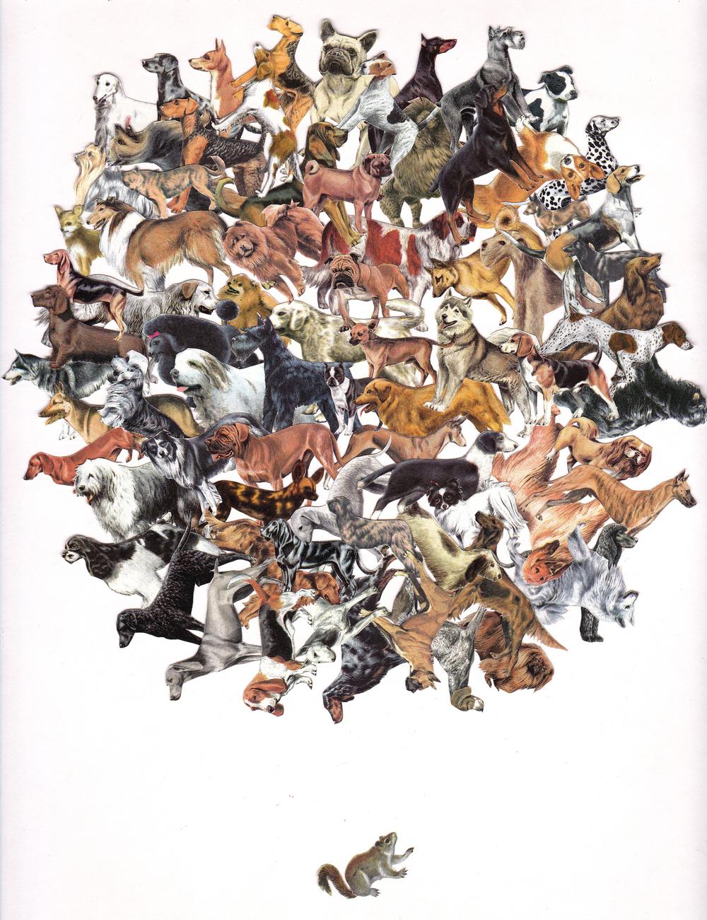 Family of Dawgs Squirrel.jpg