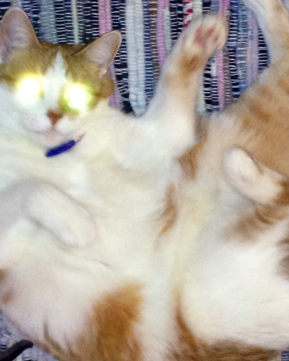 Ils m`ont Kitty of Lights appel.