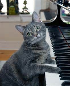 Nora the Piano Cat                     Photo Credit: Burnell Yow
