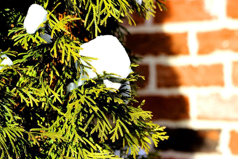 Snow-130105.jpg