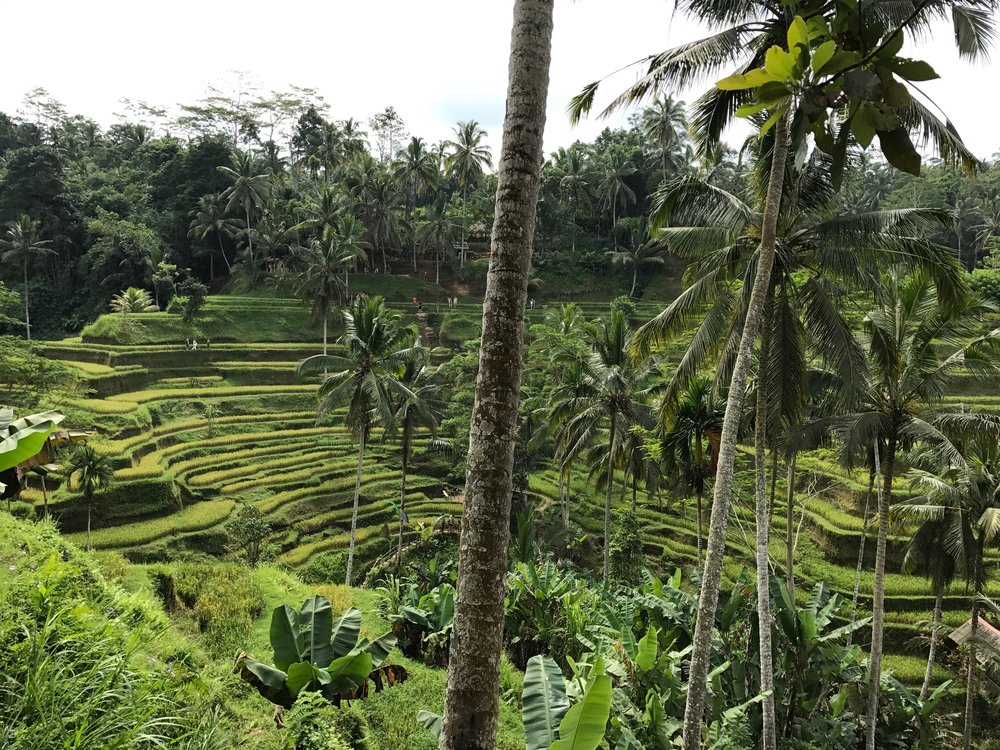 Tegallalang Rice Terraces Bali Indonesia