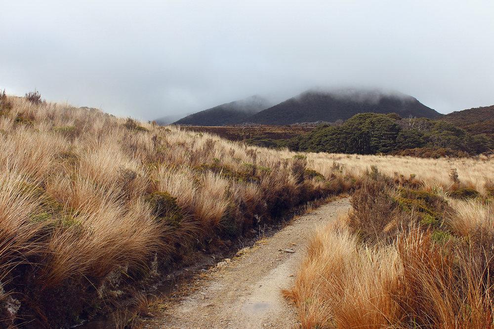 iamstingo-hiking3.jpg