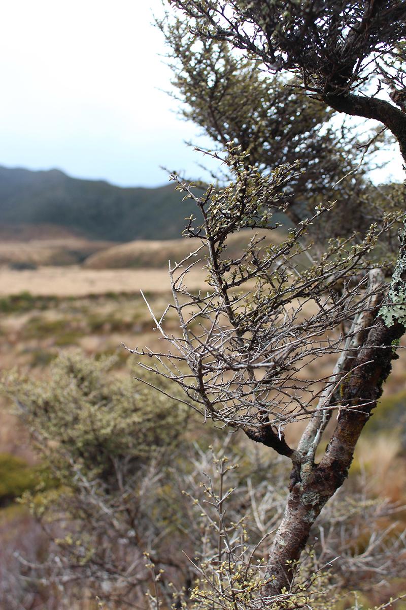 iamstingo-hiking9.jpg