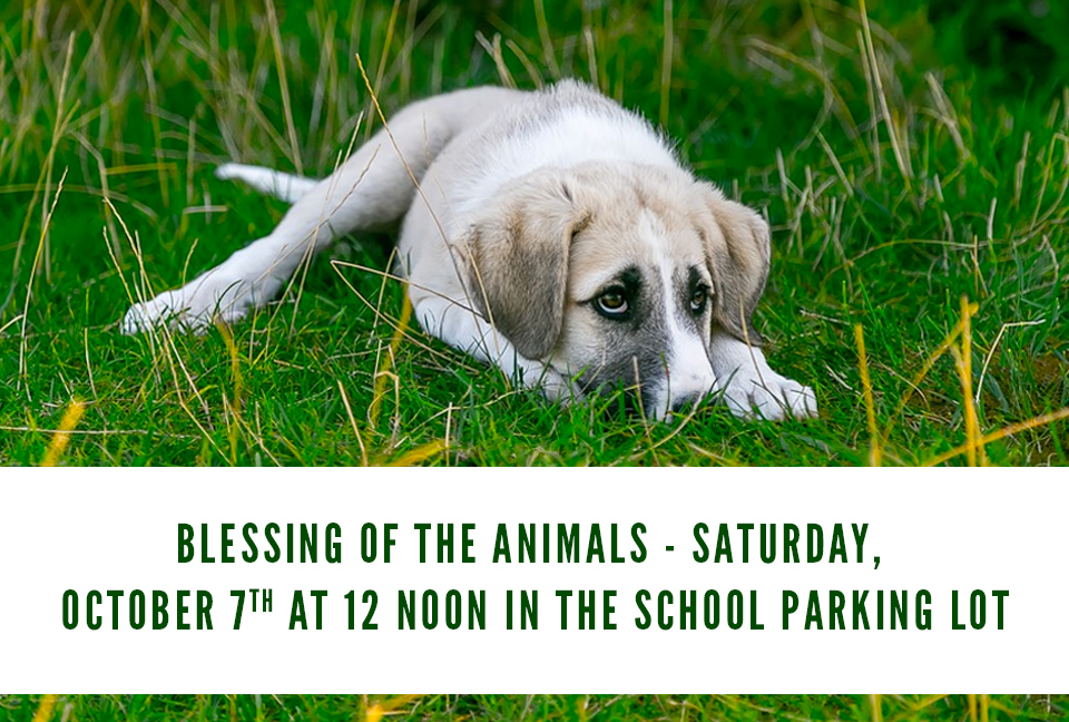 blessing-of-animals-2017.jpg