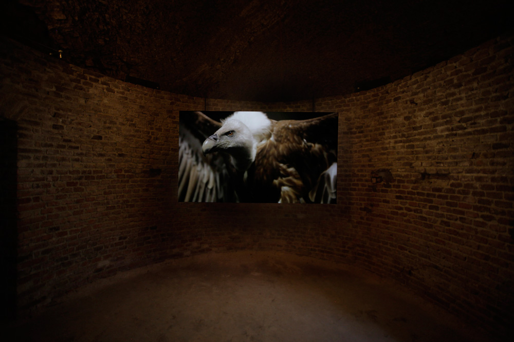 Allora & Calzadilla,  Raptor's Rapture , 2012 Courtesy Allora & Calzadilla and Lisson Gallery, London