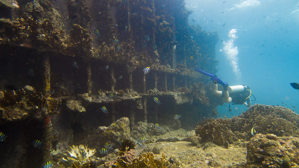 Diving the wreck of the M/V Guimaras off Danjugan Island, Negros Occidental