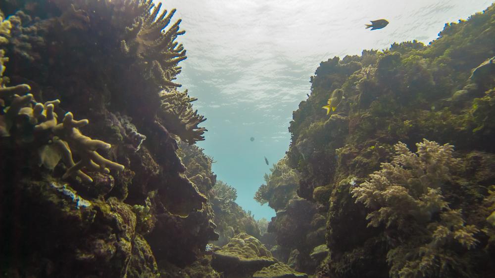 "A ""valley"" opens up at Manta Reef. Photo (c) Nixee Garcia."