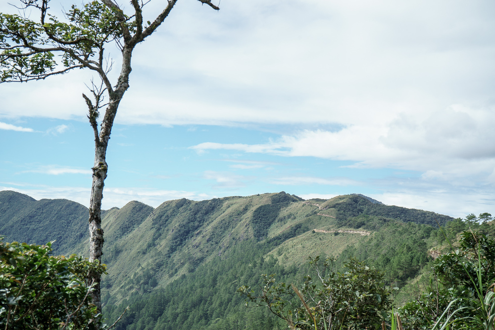 Me taking in the scenery in the pine forest from the 2nd day of the Mt. Ugo Trek. (Photo: Justin Monteron)
