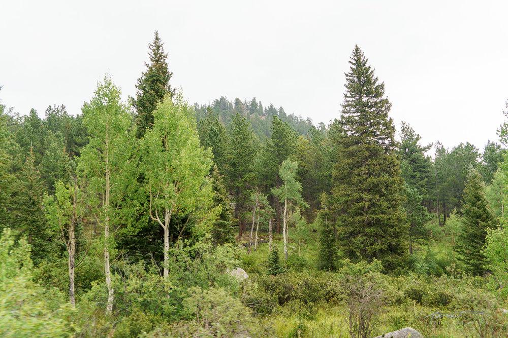 See? Trees.