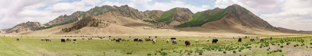 Panorama of said yak spot