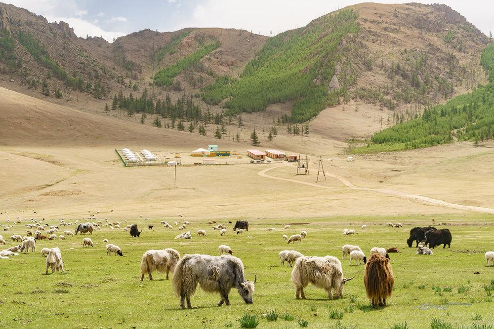Signature Mongolian view