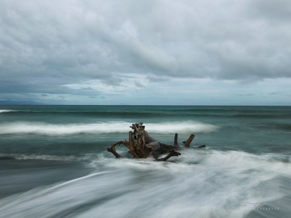 Dead tree on Sabang Beach, Baler. iPhone X live photo converted to long exposure.