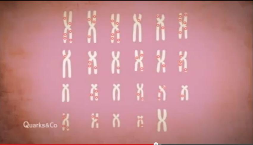 Autoimmunerkrankung  Video