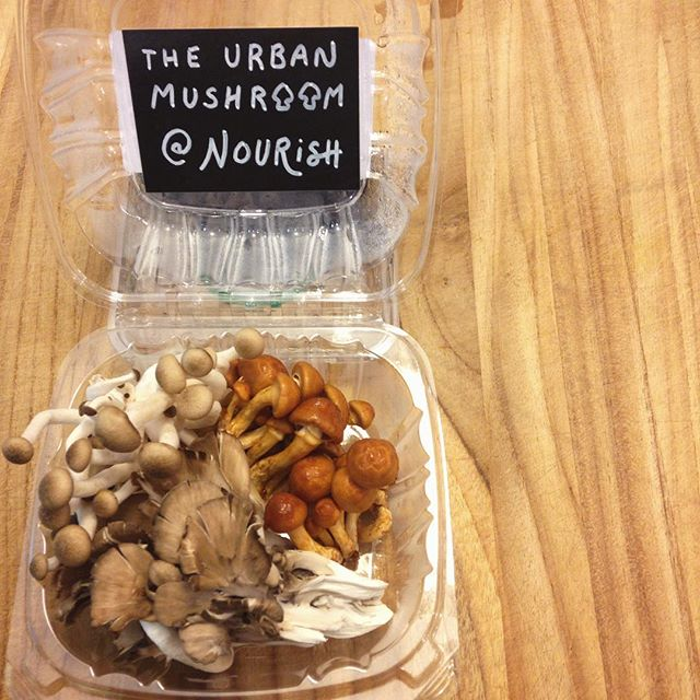 Now on our produce shelves, mushrooms from @theurbanmushroom! We have three different varieties- the beloved Maitake (i.e. Hen of the Woods), Forest Nameko, and the familiar and delicious Shiitake! Come get them before they're gone! #supportlocal #grandrapids #westmichigan #organic #nutrition #health #naturalmedicine #fungi #maitake #nameko #shiitake #mushrooms #shroomies #eatwell #nourishorganicmarket