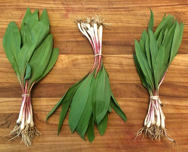 It's that time of year for WILD RAMPS! We have wild-foraged ramps, also known as wild leeks! Stop on by before we sell out! Yum! #wildfood #foraged #wildramps #wildleeks #westmichigan #yum #fromtheearth #delicious #foraging #spring #springfood #ramps #leeks #beautiful #nourishorganicmarket