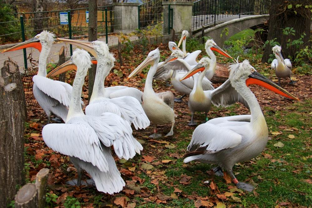 Zoo_Wien
