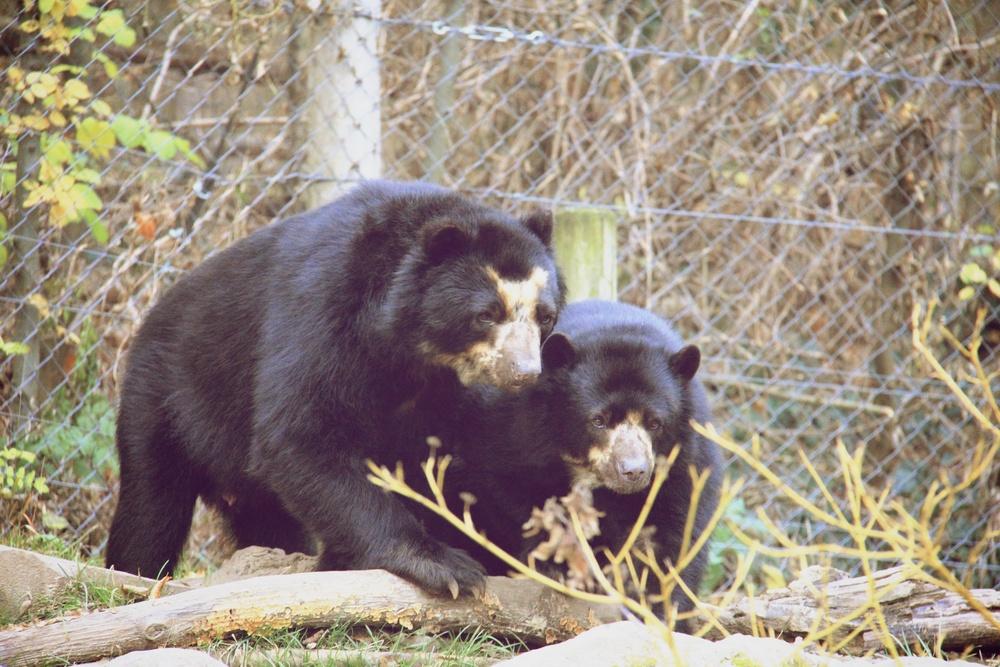 Zoo_Wien_Bears