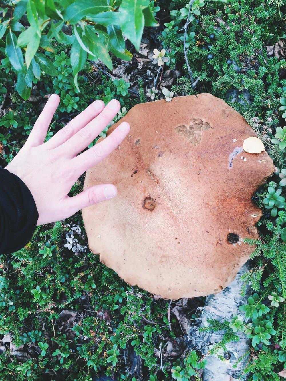 Pilze in Übergrössen