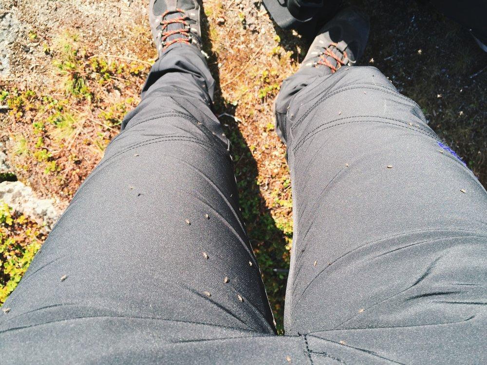 Kaum ist es sonnig und windstill gibt es eine Moskitoattacke (die stechen auch durch zwei Lagen Hosen)