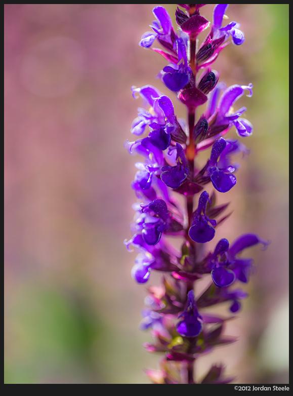 subtle_purples.jpg