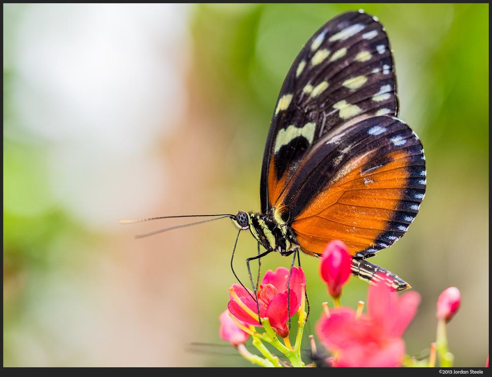 butterfly_pen1.jpg