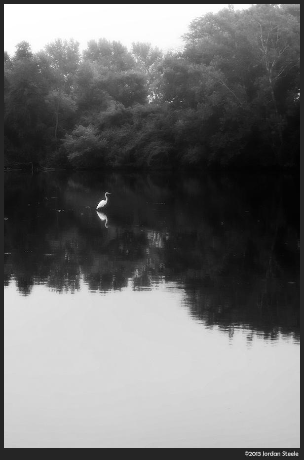 misty_egret.jpg