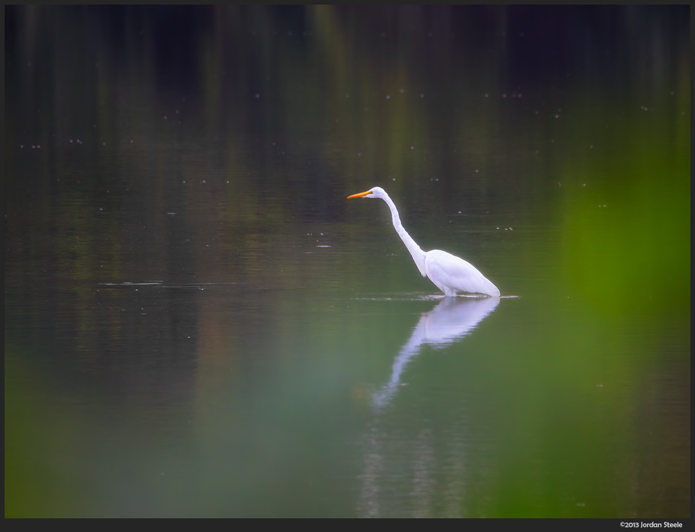 egret_morning.jpg