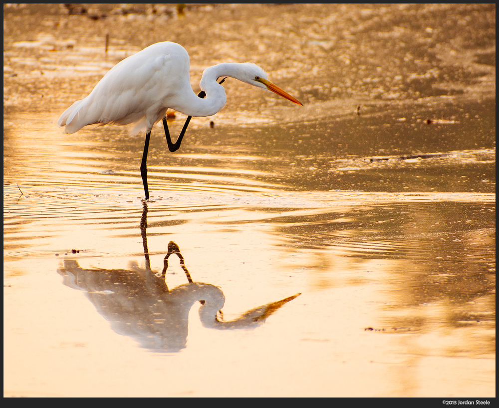 egret_sunrise.jpg