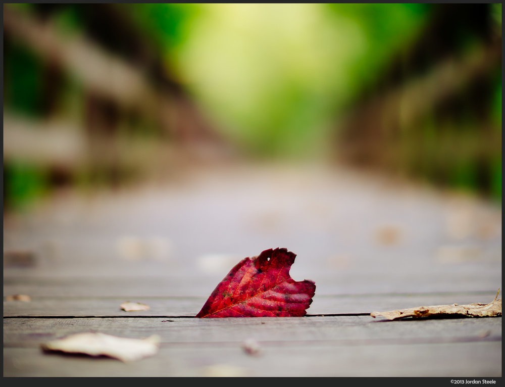 leaf_boardwalk.jpg