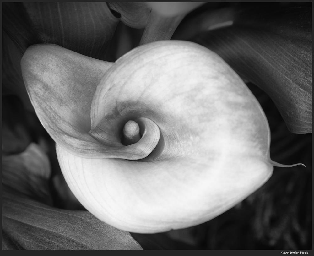 spiral_flower.jpg