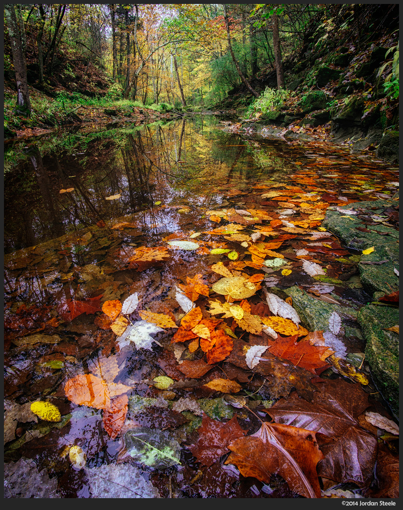 autumn_stream_leaves.jpg
