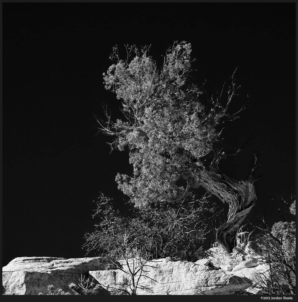 lone_tree.jpg
