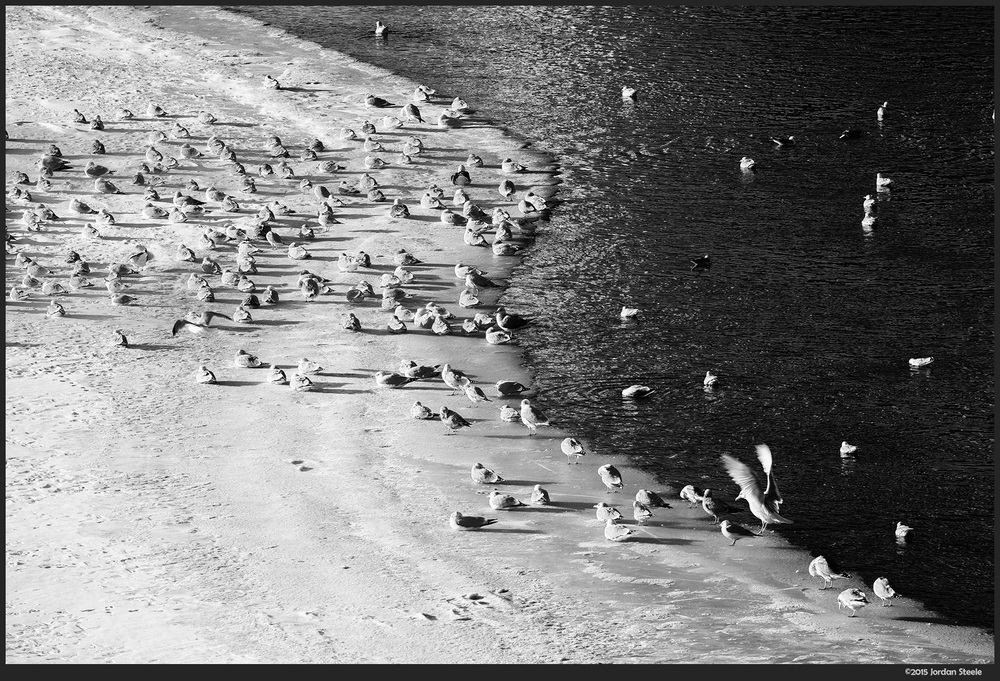 gulls_snow.jpg