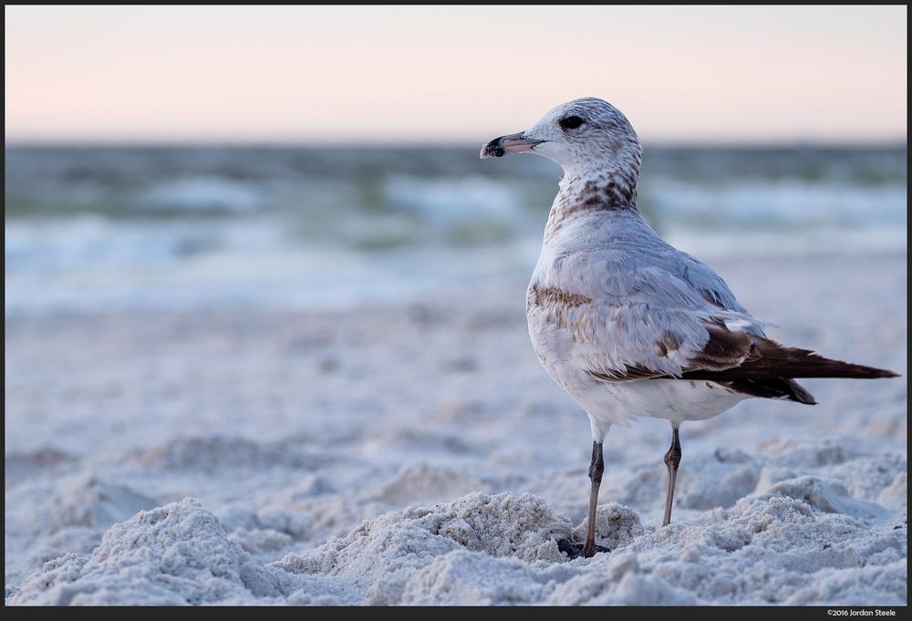 gull_beach.jpg