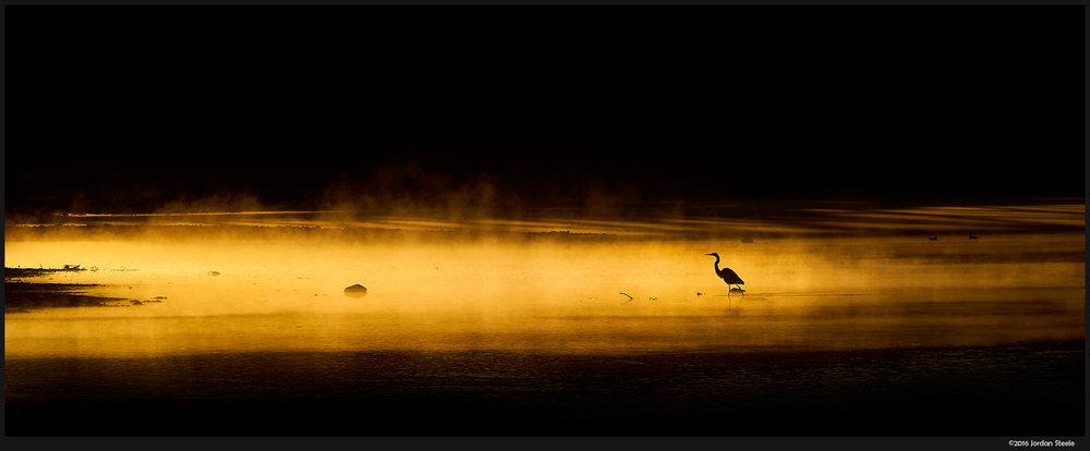 egret_golden_mist.jpg